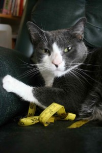 Cat lying on top of a tape measure