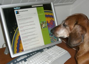 Dog in front of PC