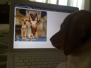 Dog looking at pictures of dog bodybuilders