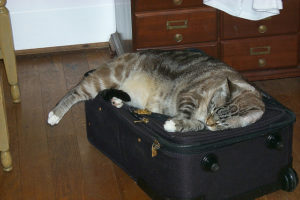 luggage cat travel insurance