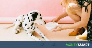 unusual part time jobs pet sitter pet boarder