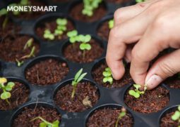 urban farming singapore green how to save money