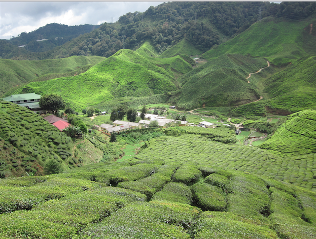 Cameron Highlands - MoneySmart