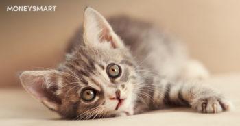 cat adoption singapore